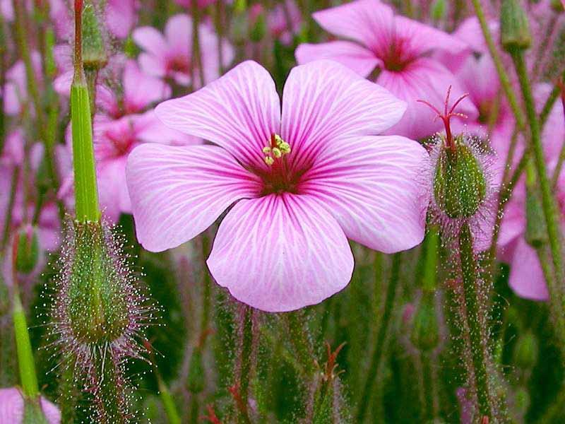 23 amazing flowers ndash - photo #20